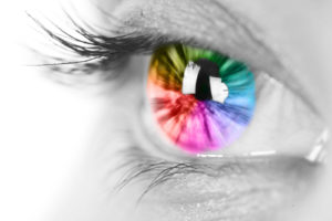 Our Complicated Eyes: A Simple Way of Understanding How Vision Works