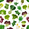 4 Super Leafy Greens for Improved Eyesight
