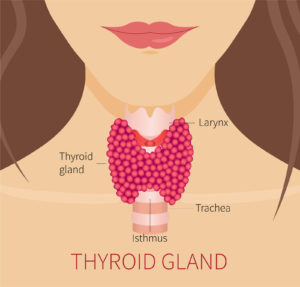 How Thyroid Conditions Affect Our Eyes