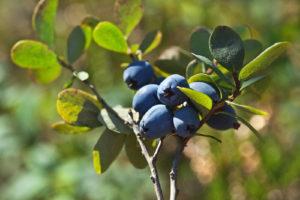 Best Herbs for Eyesight
